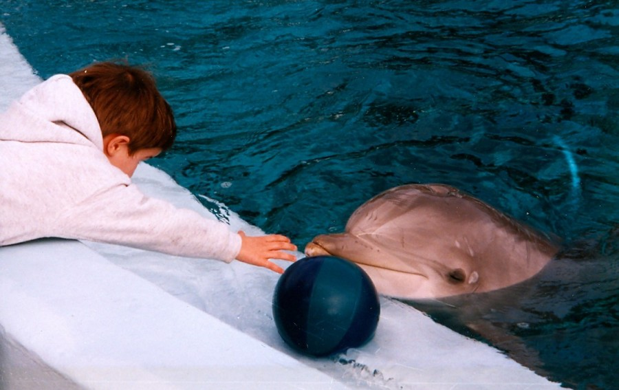 """Dolphins, and by extension cetasapiens [a fictional species of civilized cetaceans], don't see the way we do. In fact, 'see' is misleading. Human perception is very limited by comparison with what CTs can sense with echolocation, sonar, taste, hearing, and who knows what other biological senses. ... they 'see,' in 3D as it were, including density, form, background - a whole range of sources that create a hologram, not just a flat surface..."" (Betty Ballantine, 'The Secret Oceans.' Photo credit Kim Bartlett - Animal People, Inc.)"