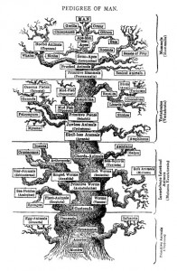 "Ernst Haeckel's heirarchical portrayal of the Tree of Life, from his book The Evolution of Man (1879) (Image source: <a href=""http://commons.wikimedia.org/wiki/File:Tree_of_life_by_Haeckel.jpg"">Wikimedia Commons</a>)"